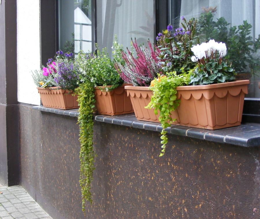 Herbstliche Blumenkästen Bilder : wim wir in mintard e v ~ Lizthompson.info Haus und Dekorationen